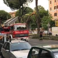 Roma, pino cade sulla Prenestina: tram bloccati. Albero su cinque auto a Monteverde