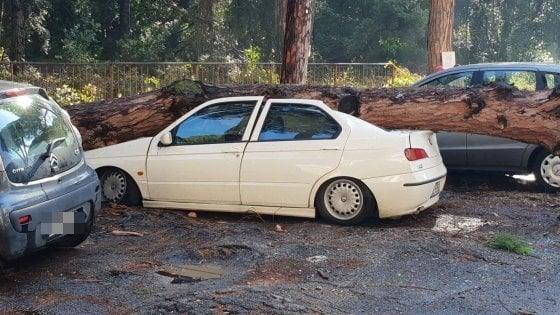 Roma,  albero crolla su auto in sosta a Ostia: nessun ferito