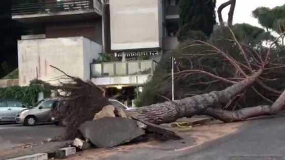Roma, pino marittimo crolla in strada a Mostacciano: nessun ferito