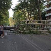 Roma, platano giù in viale Angelico. Danneggiate due auto in sosta, nessun ferito