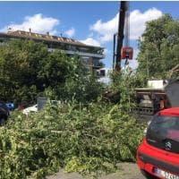 Albero crollato in via Lanciani, danni e un'automobilista ferita