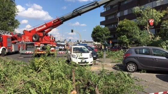 Roma, albero cade su due auto: ferita una donna. E' il secondo caso nel giro di 24 ore