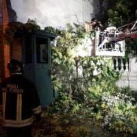 Roma, albero cade su garitta del Quirinale: illeso il carabiniere che era