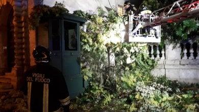 Temporali e vento forte, albero cade su garitta del Quirinale: illeso il carabiniere