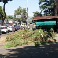 Roma, ramo cade su un'auto: ferito il conducente