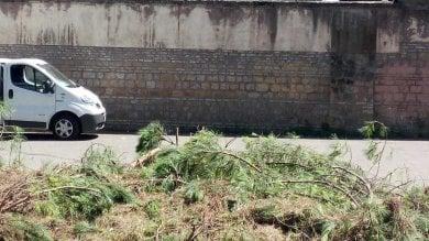 Ramo cade su auto: ferito il conducente
