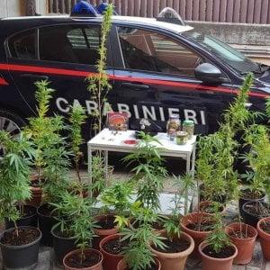Roma,  coltiva marijuana in casa con l'aiuto del padre agronomo: arrestato. Denunciato il 16enne