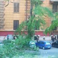 Roma, albero cade in via Oslavia: strada chiusa e bus deviati