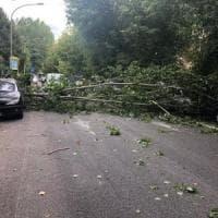 Maltempo su Roma, alberi caduti: ferito un centauro. Rallentamenti su strade