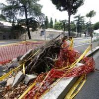 Roma, flop del piano alberi potati: solo 2 su 100. Nuova raffica di crolli