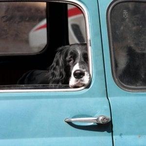 Lascia cani nell'auto sotto il sole: anziano denunciato a Tarquinia