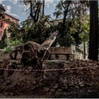 Cipressi storici caduti in piazza del Popolo dopo la pioggia. Il Comune: