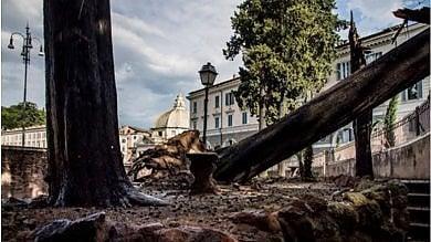 """Piazza del Popolo, cipressi storici caduti dopo le piogge. Il Comune: """"Non si salvano, vanno abbattuti"""""""