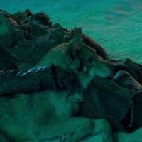 È di Anagni il cane protagonista del film