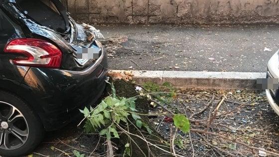 Roma, albero crolla e gli distrugge l'auto: il proprietario costretto anche a pagare la rimozione