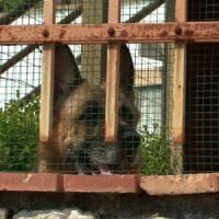 Cane uccide medico a Fondi, il padrone dell'animale indagato per omicidio