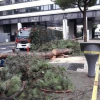Roma, albero cade a Cinecittà: nessun ferito