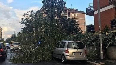 Nubifragio in città: alberi caduti disagi alla circolazione e traffico in tilt