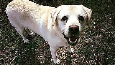 """Bracciano, """"Baffi d'argento"""", cure e amore nell'hospice per i cani rimasti orfani"""