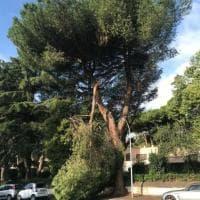 Roma, ramo di pino si stacca e invade la strada all'Eur: nessun ferito