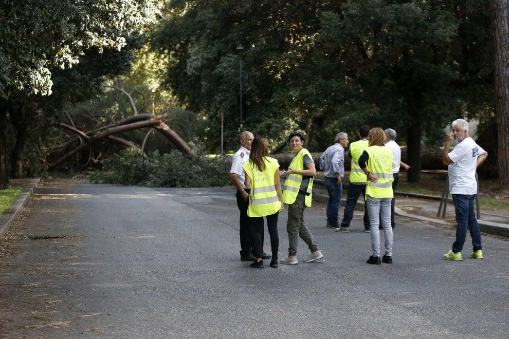 Roma, pino alto 30 metri crolla alle Terme di Caracalla. E in via Campania albero si schianta sulle auto in sosta