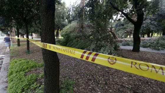 Vento su Roma, albero cade su auto in via Campania. Crolli alle Terme di Caracalla, Prati  e sulla Portuense