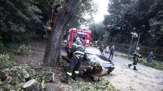 Roma, cade albero vicino al Bioparco. Ferita una donna