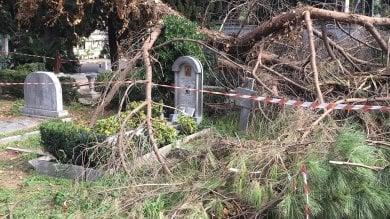 """L'assessora all'Ambiente: """"La salute degli alberi? Roma meglio di altre città"""""""