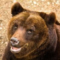 Tar del Lazio accoglie ricorso Associazioni, stop alla caccia nel Parco