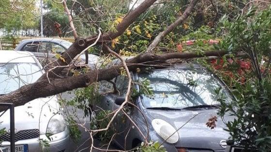 Roma, il vento spazza la città, decine di alberi crollati. Ecco la mappa