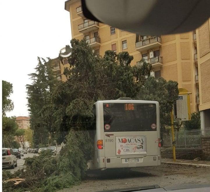 Maltempo Roma, alberi e rami crollati in tutta la città. Dal Circo Massimo, a via Nicotera, da via dei Romanisti a viale Liegi