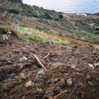 Maltempo a Ponza, frana  distrugge i vigneti borbonici del '700