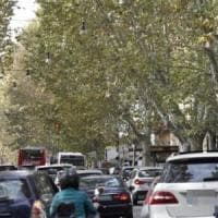 Roma, traffico in tilt sul Lungotevere per l'intervento su un albero pericolante