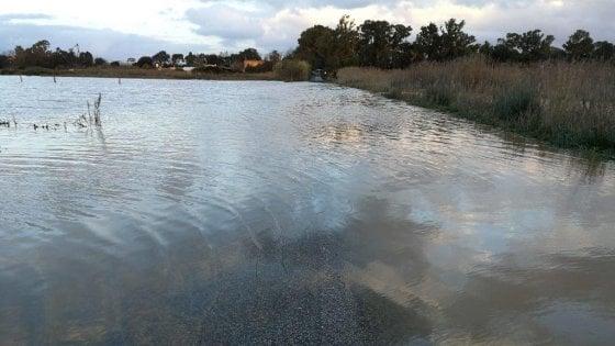 """Agro pontino sott'acqua, ritorno al passato: """"La palude si è ripresa città e parco"""""""