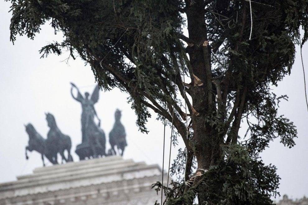Spelacchio arriva  a Roma (con qualche ramo spezzato)