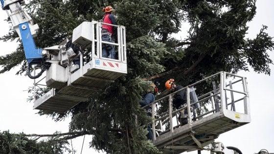 """In difesa di """"spezzacchio"""", allegoria di Roma e dell'Italia"""