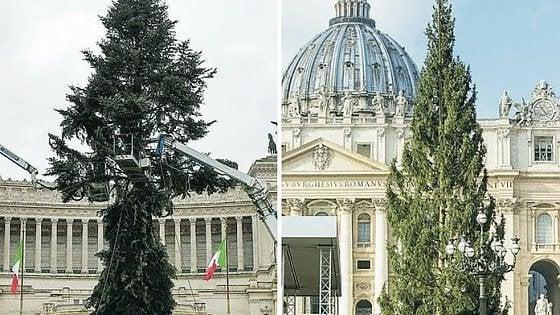 Albero intero o rami tagliati: San Pietro batte Campidoglio