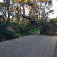 Roma, crolla quercia secolare dentro Villa Borghese