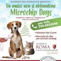 Roma, Tiburtina: giornata del microchip gratuito per gli amici a quattro