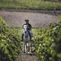 Con i cavalli e la geotermia nel Lazio il vino torna all'antico