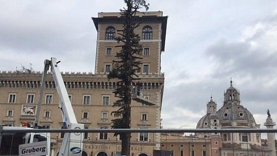 Spelacchio 2, la festa è finita: smontato l'albero di piazza Venezia