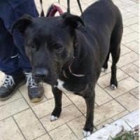Clochard investito e ucciso, la cagnolina Lilla in attesa di adozione: