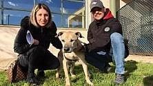 Trova famiglia dopo  11 anni di canile   video