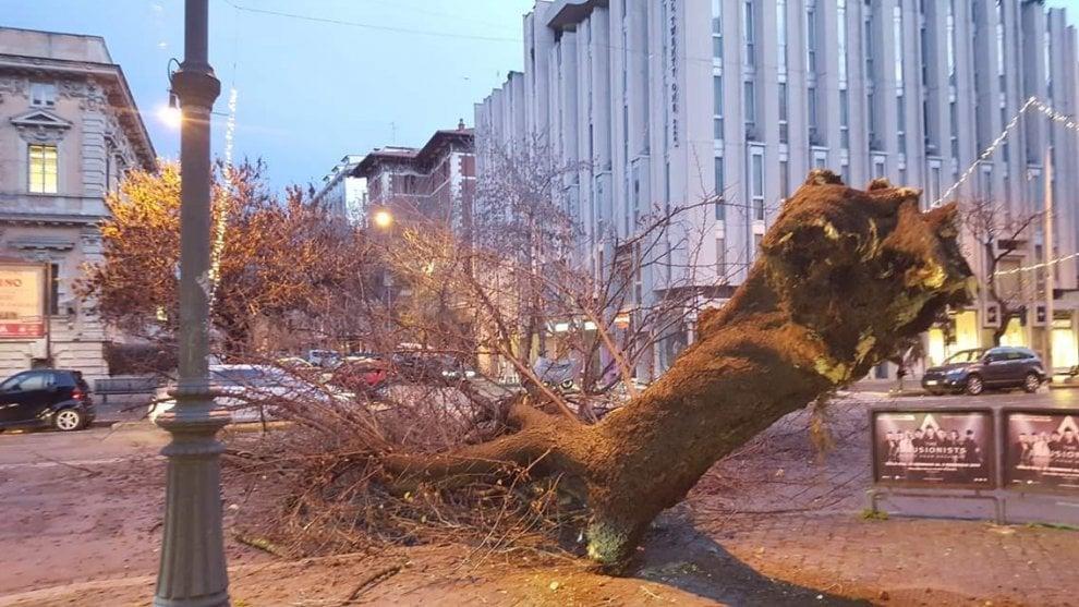 Prati, crolla un albero in piazza Cola di Rienzo, nessun ferito
