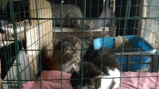 Roma, povero e solo condivideva i pasti Caritas con i 59 gatti che aveva in casa: intervengono i vigili