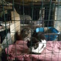 Roma, povero e solo condivideva i pasti Caritas con i 59 gatti che aveva