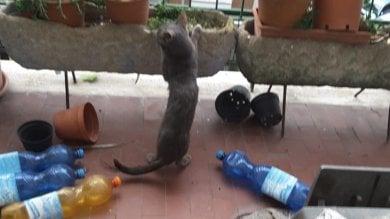 Condivideva i pasti Caritas con i 59 gatti che aveva in casa: intervengono i vigili