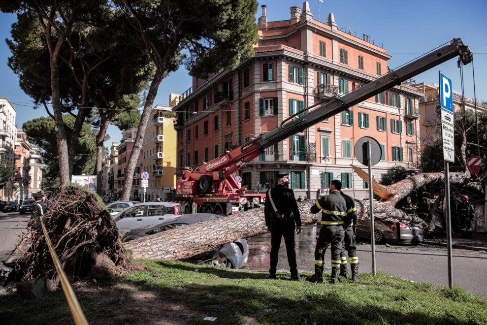 Roma, paura al liceo Giulio Cesare: pino crolla in corso Trieste