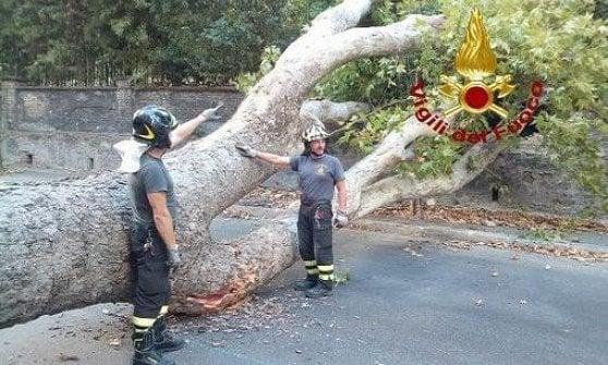 Roma, strade imbiancate: forte grandinata al quartiere Trieste-Salario, albero crolla in strada ad Acilia