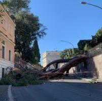 Vento forte, alberi crollati in tutta Roma, dal Gianicolo a Casal del Marmo